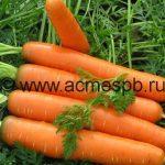 Чем полезна оранжевая красавица морковь?