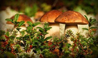 Пять мифов о пользе и вреде грибов