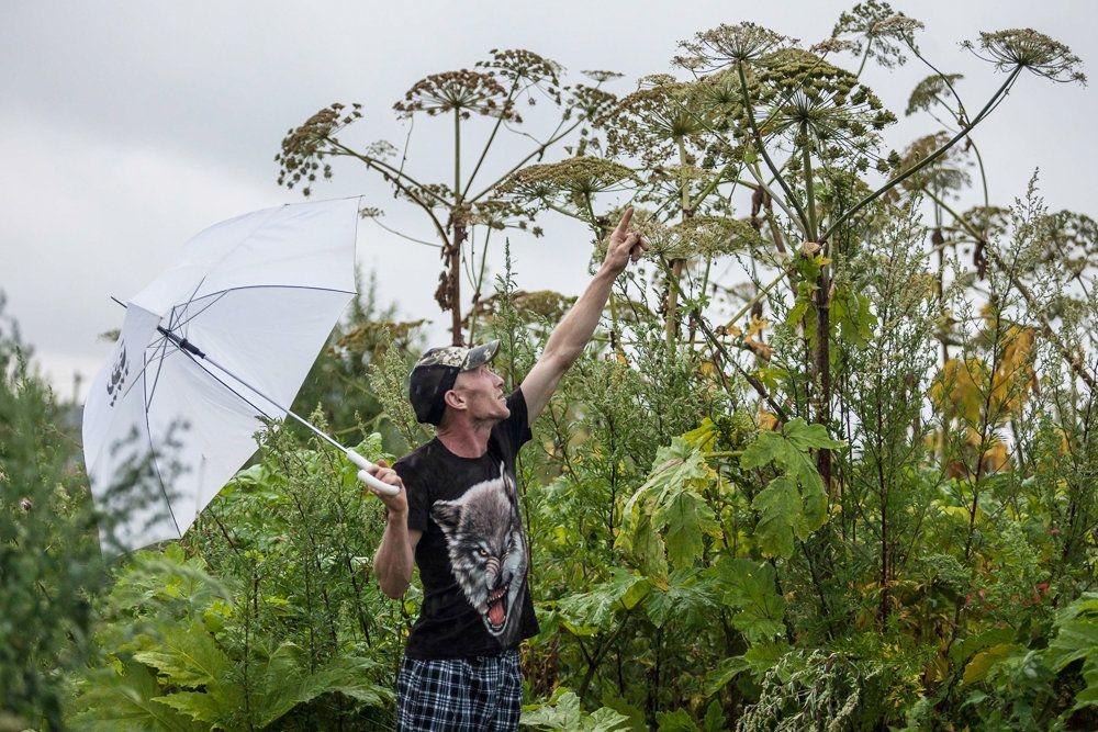 укол зонтиком