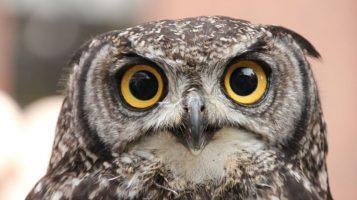 Ученые объяснили, почему «совам» вредно жить как «жаворонкам»